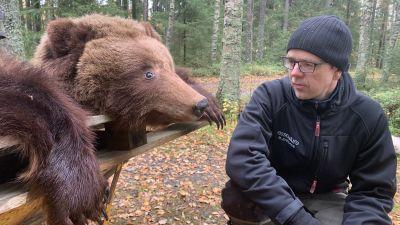 En man med mössa och glasögon står på huk intill en björnfäll ute i skogen.