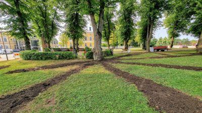 Marken kring ett träd har grävts upp i långa linjer som börjar vid trädroten.