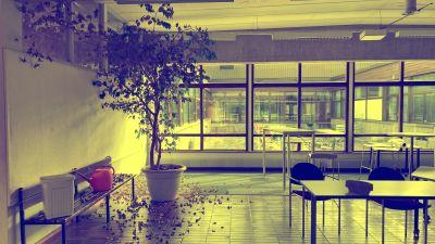 En bild på ett rum med ett träd och stolar i gymnasiets aula.