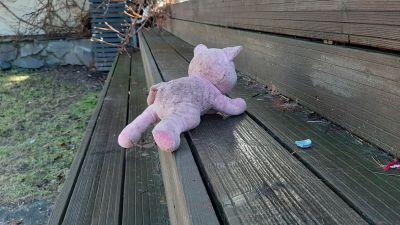 Rosa gris på trappsteg.