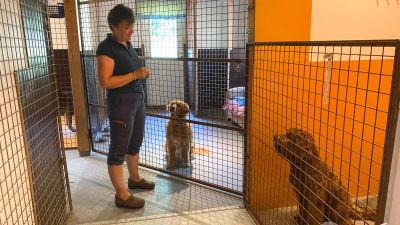 En kvinna står framför tre hundar i varsitt rum med gallerdörr.