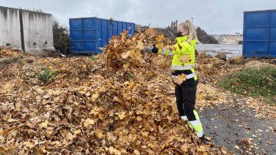 En kvinna i gul arbetsdräkt kastar löv i luften.
