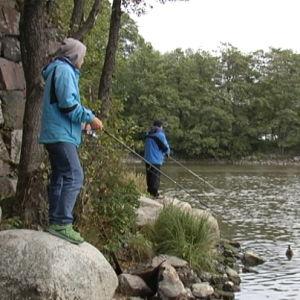 Fritidsfiskare vid Gammelstadsforsen i Helsingfors.