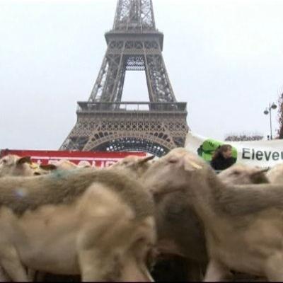 Franska får demonstrerar mot regeringens vargpolitik vid Eiffeltornet.