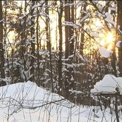 Vacker vintervy