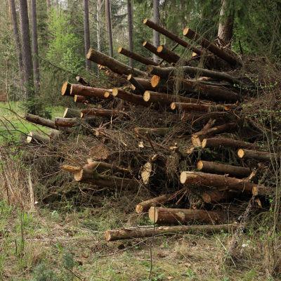 En hög döda träd vid en tysk skogsväg