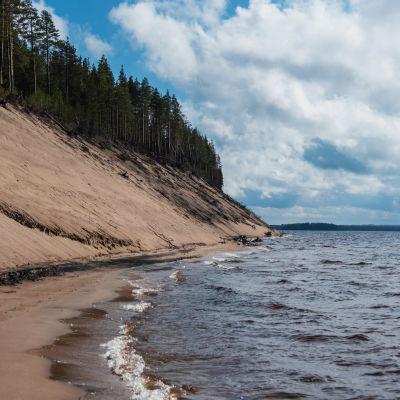 Järvenranta, vedestä nousee korkea hiekkasärkkä, särkän päällä havumetsää