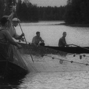 Kalastajia kokemassa verkkojaan