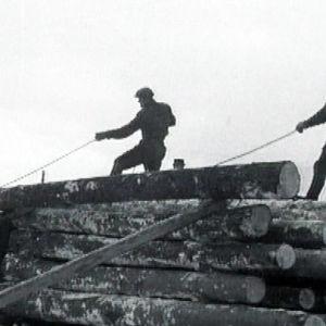 Talven metsätöitä Haapajärvellä 1949.