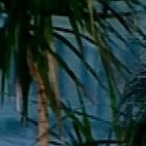 Andy McCoy Aamu-tv:n haastattelussa 2002.