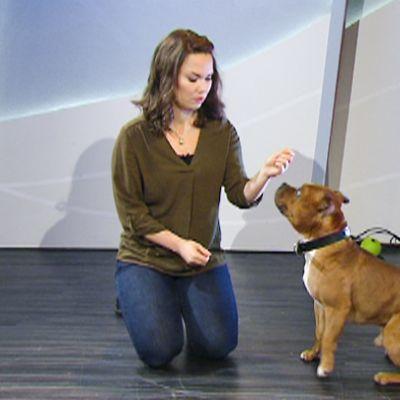 Nainen leikkii koiran kanssa aamu-tv:n studiossa.