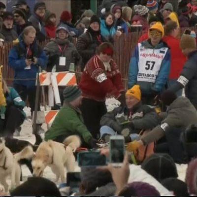 Iditarod-kisan näytöslähtö
