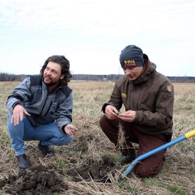 maanviljelijä Tommi Hasu ja Soilfood oy:n Sampo Järnefelt tutkiskelevat kyykistyineinä pellon savea.