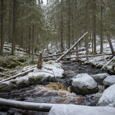Vesi kuohuu Katikankanjonissa Kauhaneva-Pohjankankaan kansallispuistossa joulukuussa 2020.