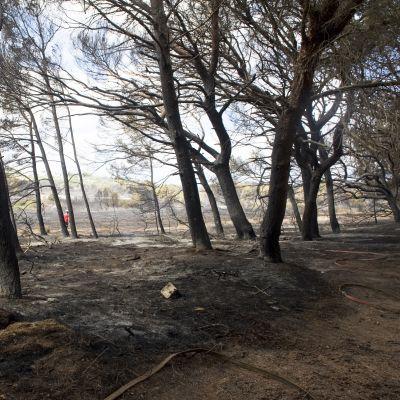 Metsäpalon jälkiä Mahonin kylässä Mallorcalla 6. syyskuuta.