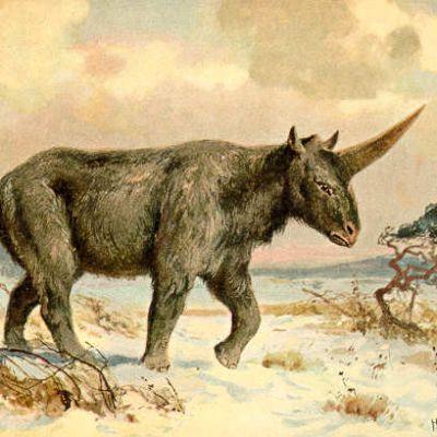 Vankka sarvikuonoa muistuttava eläin aromaisemassa.