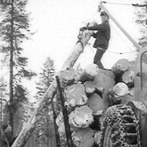 Metsätyömies nostaa tukkeja.