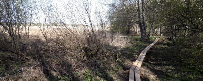 En naturstig leder in i en skogsdunge. Till vänster syns en åker.
