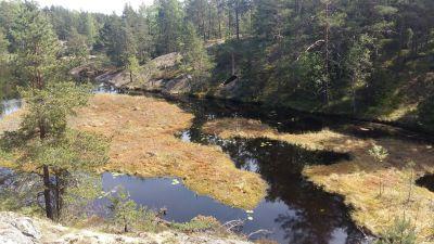 Kärrblommor, glittrande vatten och branta klippor i Lilla Masugnsträsket.