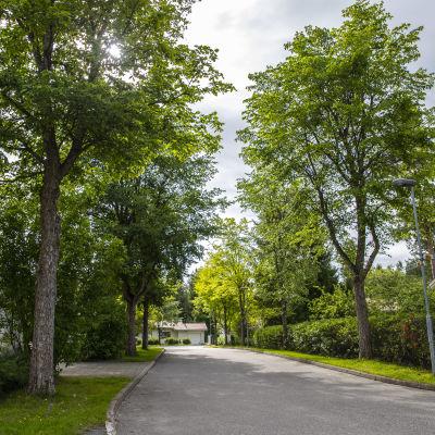 Jalavoita Kuopion Petosen alueella