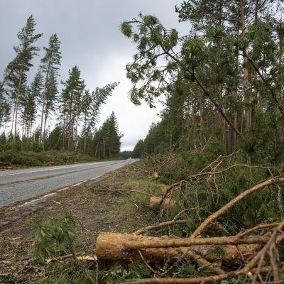 Aatu-myrsky tuhoja 9-tiellä lähellä Tohmäjärveä