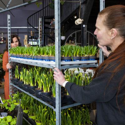 Maisemasuunnittelija Tanja Nieminen ja puutarhuri Kirsti Kankkunen siirtävät taimirullakkoa.