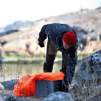 mies ottaa lintujen karkoitusnukkea  esiin
