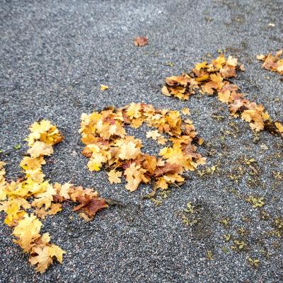 Syksyn ruskaisilla lehdillä maahan on kirjoitettu sana koti
