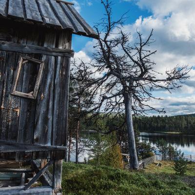 Etualalla harmaantuneesta puusta tehty aitta, takana iso kelohonka. Taustalla jyrkkä rinne, joka viettää joelle.