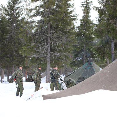 Jääkäriprikaatin varusmiehet telttamajoituksessa koronauhkan vuoksi