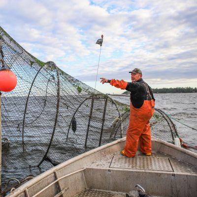 Kalastaja Miakel Lindholm hakemassa kalasaalista rysästä.