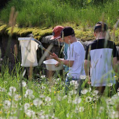 Ilari Faassen, Jooa Hotanen ja Jasper Harkko keräämässä haavilla hyönteisiä.