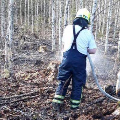 Palomies sammuttaa maastopaloa.