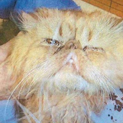 En vanvårdad katt med ljus päls