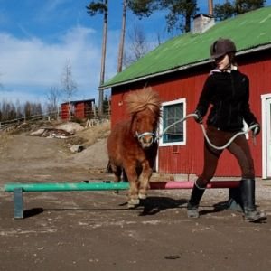 Poni hyppää pienen esteen yli, hoitaja taluttaa