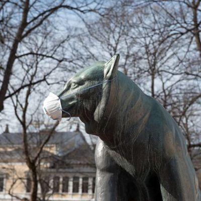 Porin Raatihuoneen puiston Karhu-patsas on saanut kuonolleen kasvomaskin.
