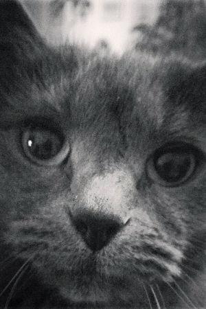 Katten Viola