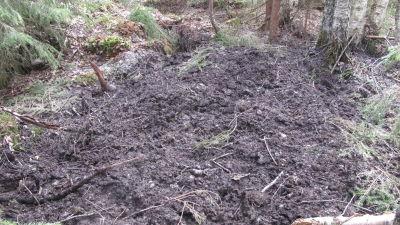 En jordhög björnen grävt ur sitt ide.