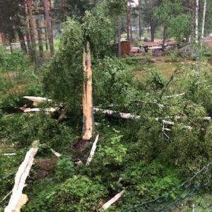 Kuva puusta, jonka salama on pistänyt säpäleiksi. Kantarunko on vielä pystyssä, vierellä puun osia.