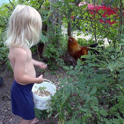 Lapsi ruokkii kanaa