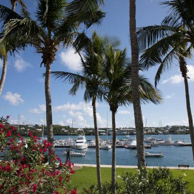 Landskap från Karibien