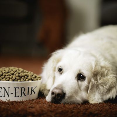 """En hund ligger intill en matkopp som har ingraveringen """"Sven-Erik""""."""