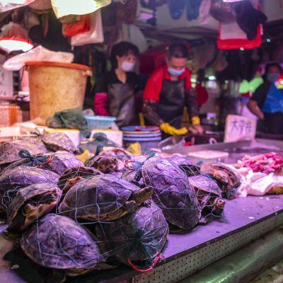 Levande sköldpaddor samlade i nätkassar ligger framme i ett torgstånd.
