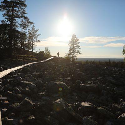 Pitkospuureitti kivikkoisessa vaaramaisemassa, vaeltaja näkyy kaukana.