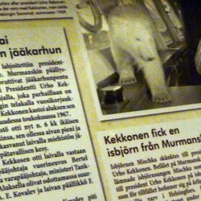 Lehtileike Urho Kekkoselle lahjoitetusta jääkarhusta.