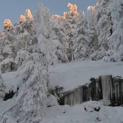 Lumisia puita, Kolin kalliota, jääpuikkoja.