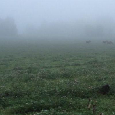 Hirvilauma pellolla