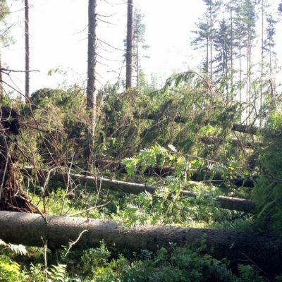 Timo Tynkkysen metsässä myräkkä kaatoi arviolta jopa 500 kuutiota puuta