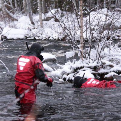 Riista- ja kalatalouden tutkijat snorklaavat Ala-Koitajoessa.