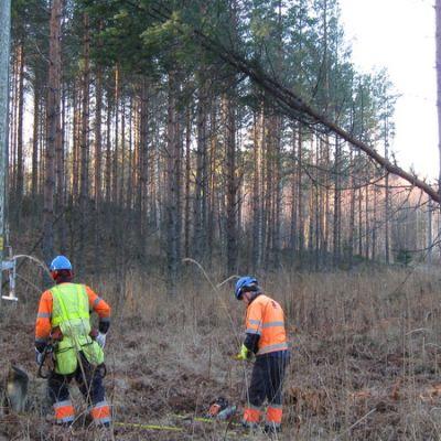 Sähköyhtiön miehet poistamassa sähkölinjan päälle kaatunutta puuta.